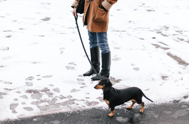 Walking dog to unplug.