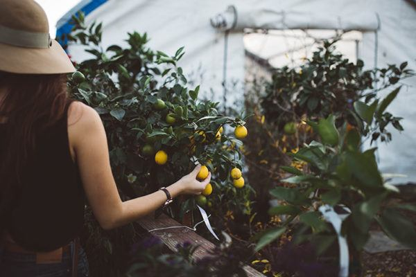 6 Plant-Raising Tips That Helped Out Green Thumbs in 2017