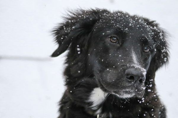 PSA: Your Pup *Probably* Needs a Winter Wardrobe—Here's Why