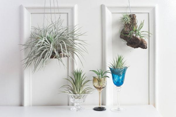 Behold: These plants don't need dirt, water, or even a pot