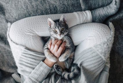 Get paid to cuddle cats in the most hygge job ever