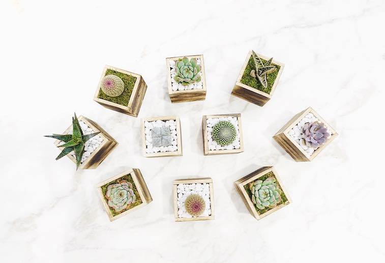Thumbnail for 7 flower and plant subscription boxes that'll give your home literal *life*