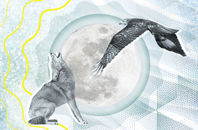 Thumbnail for Your energy horoscope for February: Get pumped, because it's time to fly high