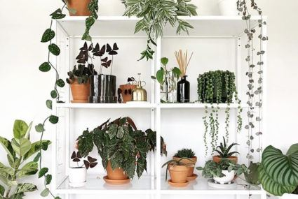 plants that need little or no natural light