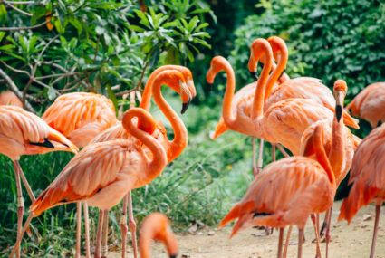 This Bahamas job is perfect for flamingo lovers