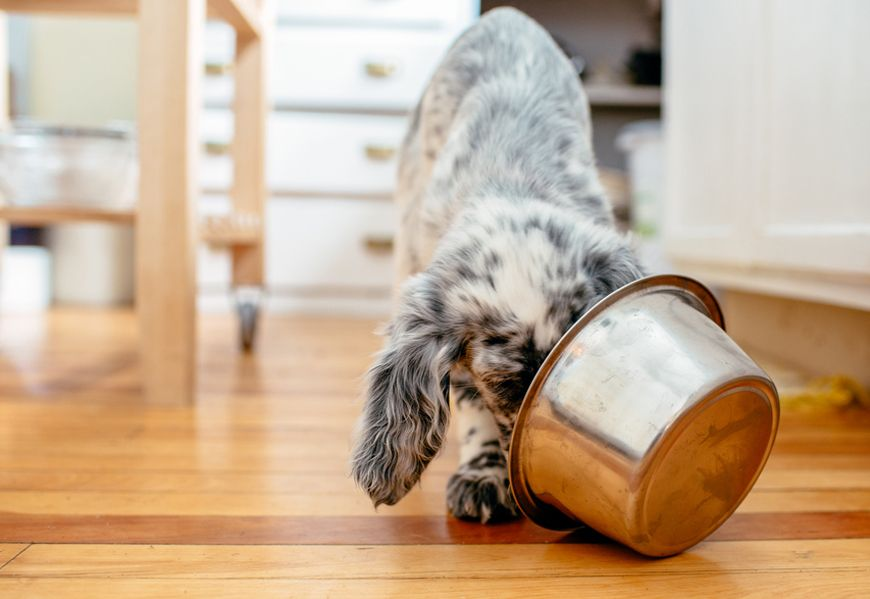 Thumbnail for 3 ways your pet's diet is getting a (much-needed) healthy makeover