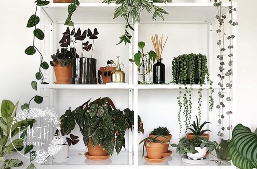 HOW TO GROW PLANTS IN YOUR HOME WHEN YOU HAVE ZERO NATURAL LIGHT