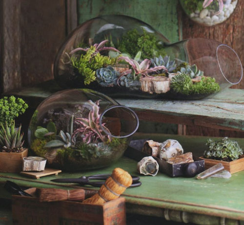 Thumbnail for 9 easy-to-maintain terrariums to spruce up your space