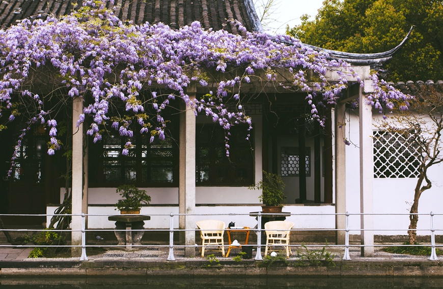 Thumbnail for Need some healthy travel inspo? China is covered in gorgeous mood-boosting flowers