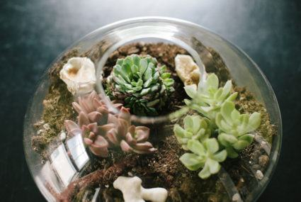 9 easy-to-maintain terrariums to spruce up your space