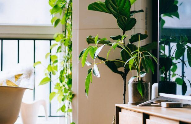 These are the plants that will actually detox your air