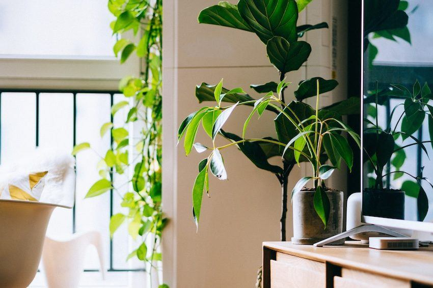 These are the plants that will actually clean up your air