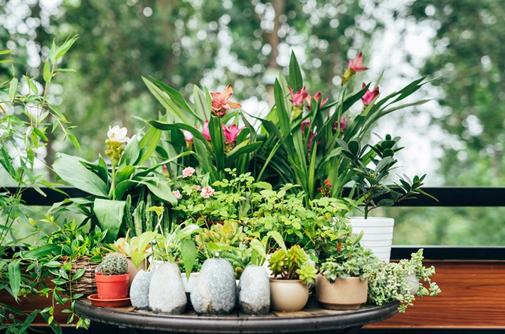4 keys to keeping plants alive, according to the ultimate plant lady