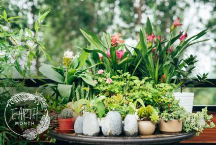 4 keys to keeping your mini-garden healthy, according to the ultimate plant lady