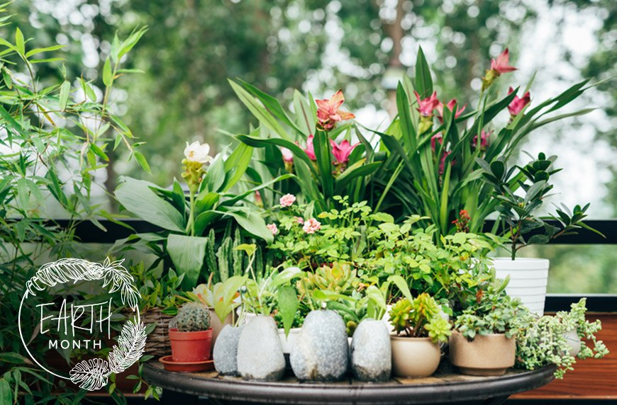 Thumbnail for 4 Keys to Keeping Your Mini-Garden Healthy, According to the Ultimate Plant Lady