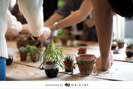 Origins NY Event succulents