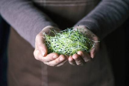 Are microgreens worth the splurge?