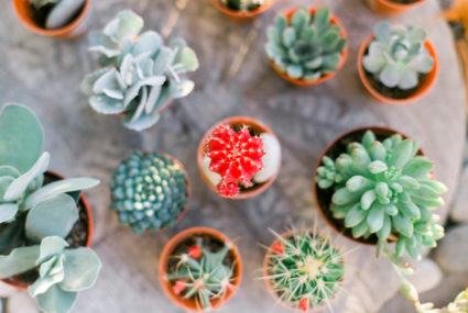 How to multiply your succulents into a garden