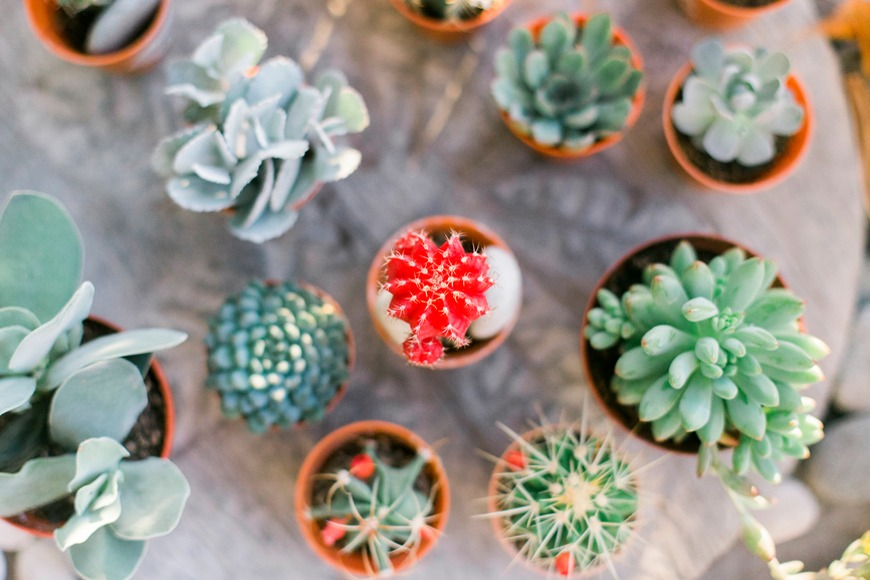 The simple way to manifest your single succulent into a full-on garden