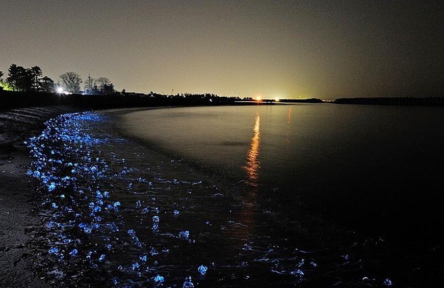 best bioluminescent in the world