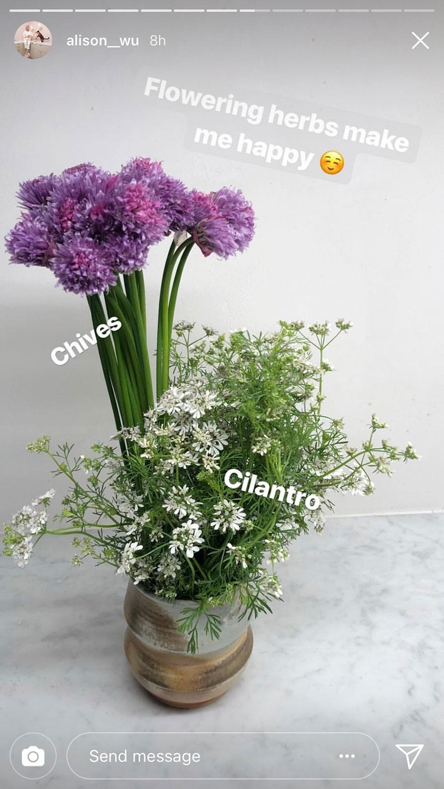 These herbs flower into the prettiest kitchen-table bouquets