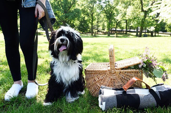 How to pack the perfect healthy picnic (for you and your furry BFF)