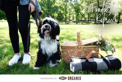 castor and pollux organic dog food