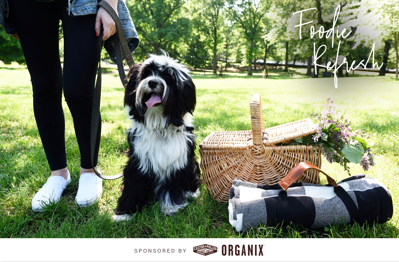 Thumbnail for How to pack the perfect healthy picnic (for you and your furry BFF)