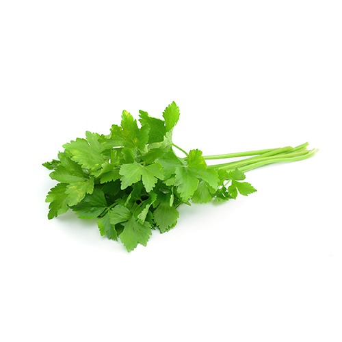 fresh cilantro including leaves and stems