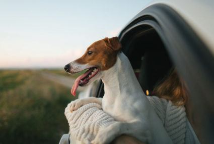 Fireworks ignite fear in your pup? Here's how to restore your canine's calm this Fourth of July