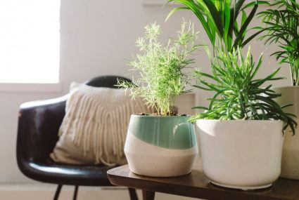11 planters to take you from plant novice to full-on greenhouse goddess