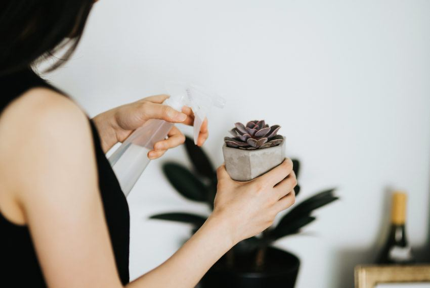 6 Under-the-Radar Stores to Score Room-Boosting Living Succulents