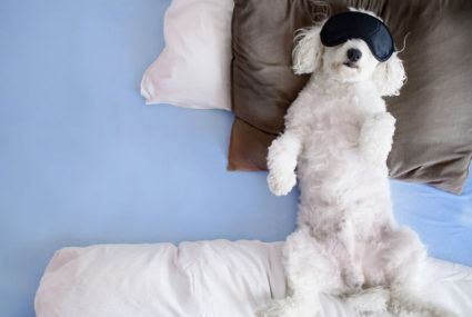 Watching animals practice self-care is the *ultimate* version of self-care
