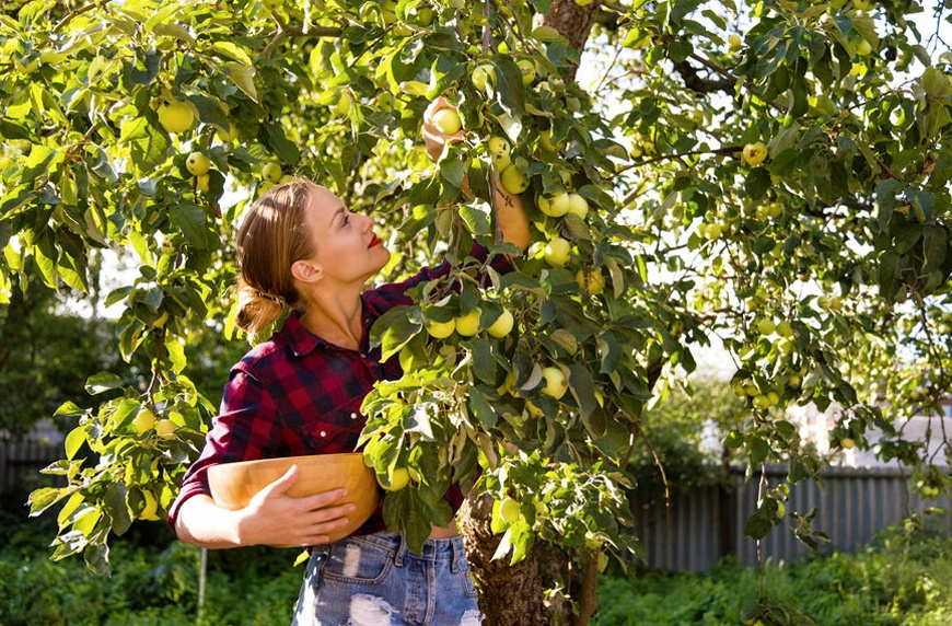 Thumbnail for It's apple picking season (just check Instagram)—here's how to keep 'em fresh for months