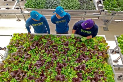 How indoor farming is making it easier to eat locally grown, pesticide-free food