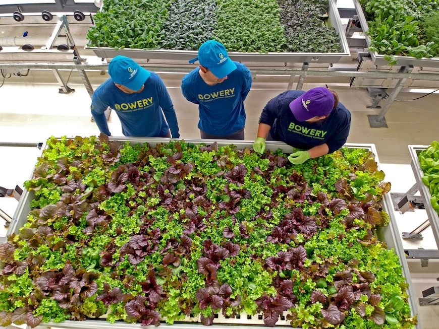 Thumbnail for How indoor farming is making it easier to eat locally grown, pesticide-free food