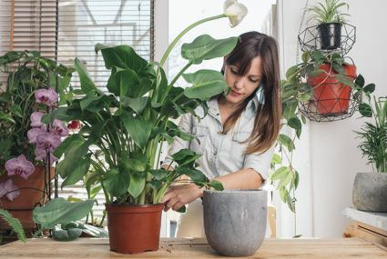 Green thumbs agree: These are the best plants for your bathroom