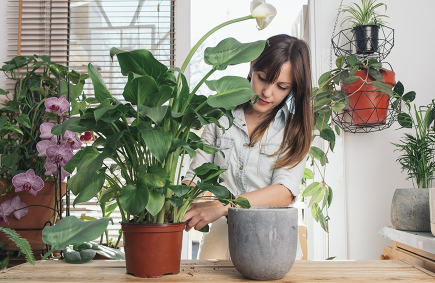Thumbnail for Green thumbs agree: These are the best bathroom plants