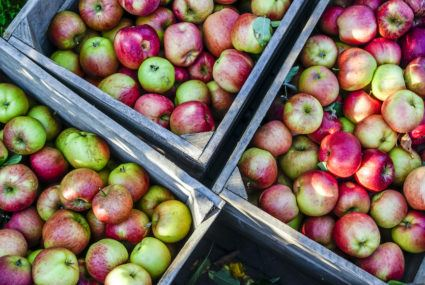 It's apple picking season, according to every Instagram post