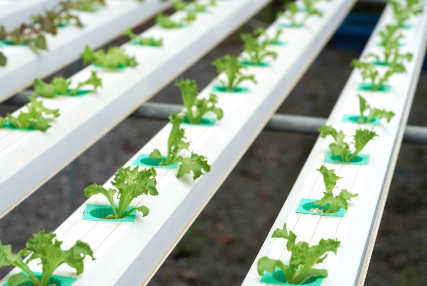 Pinterest searches for 'Aquaponic' gardening are up 1000%, but what on earth is it?