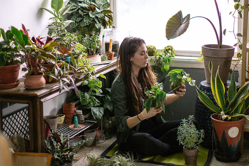Introducing sweet potato vines, the new obsession of plant ladies everywhere