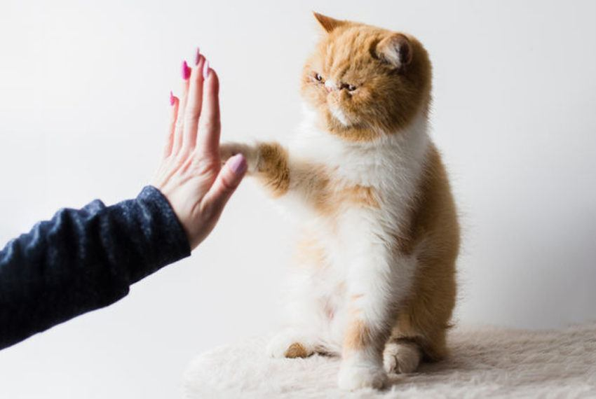 This high-fiving cat is here to congratulate you on getting through the week