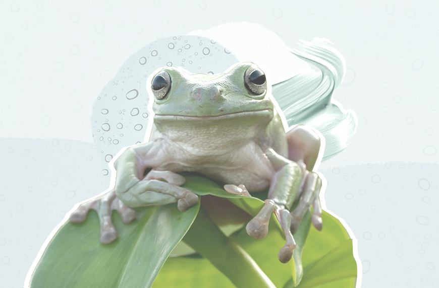 Thumbnail for Why I'm taking my skin-care inspo from a frog this winter—and yes, I'm serious