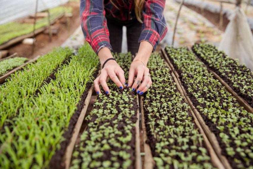 Microgreens are your ticket to becoming the Barefoot Contessa of plant ladies