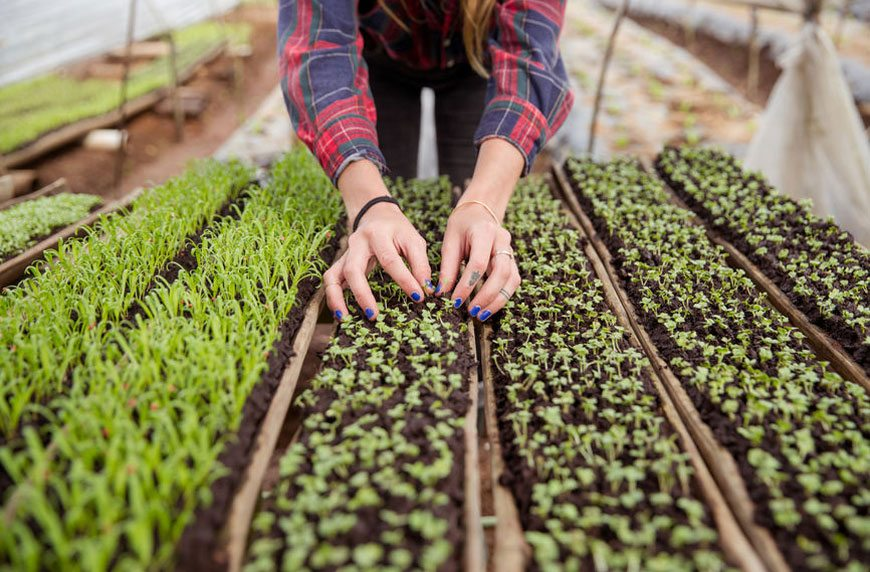Thumbnail for Microgreens are your ticket to becoming the Barefoot Contessa of plant ladies