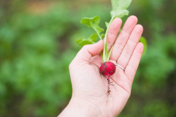 The TMI reason I'll never throw radish greens away again