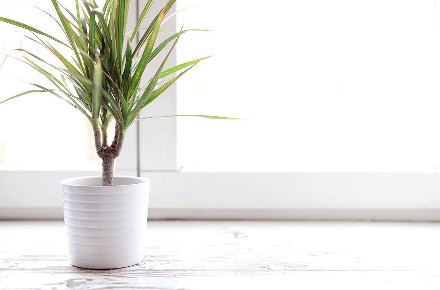 Thumbnail for Green thumb 101: These easy houseplants are the hardest to accidentally kill