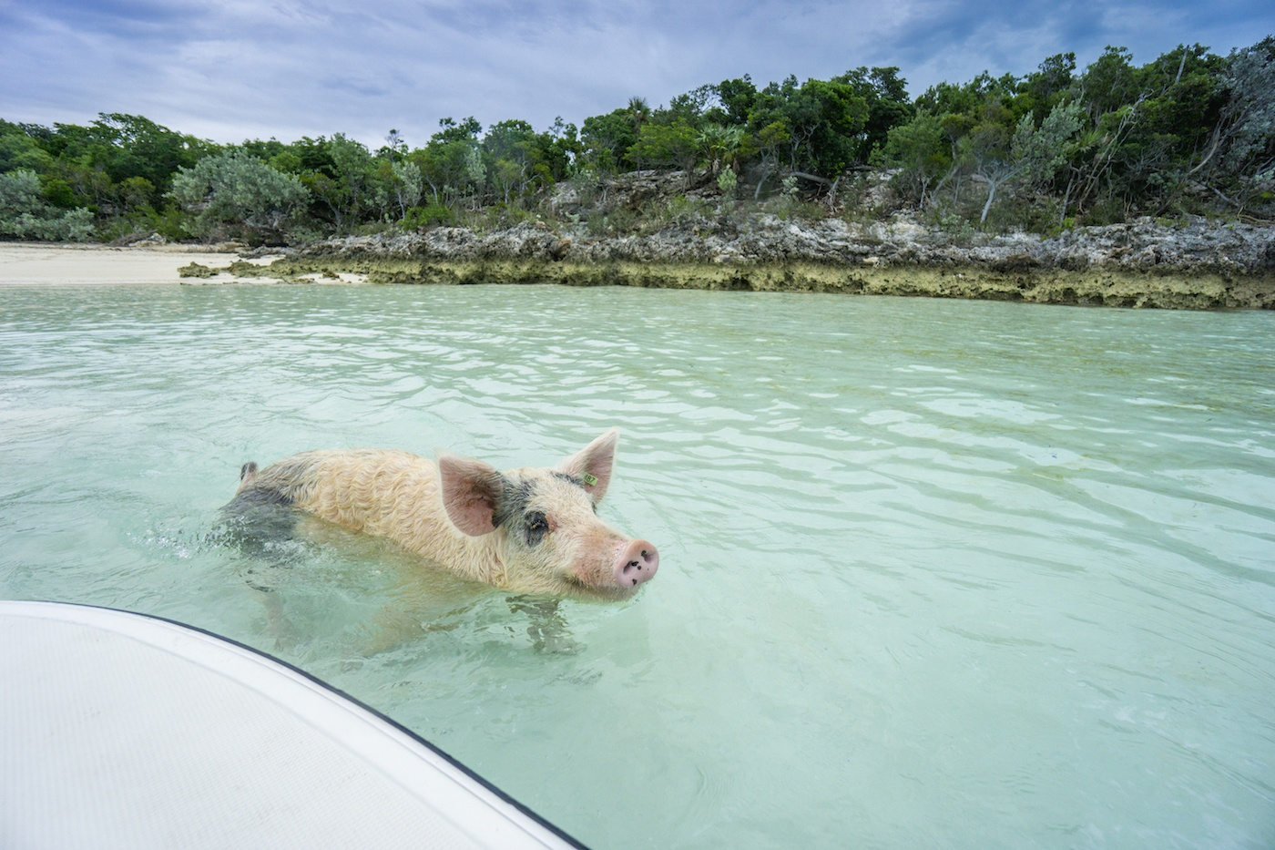 Thumbnail for I'm over this winter weather, please take me to Pig Beach