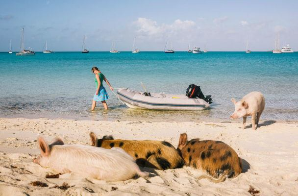 I'm over this winter weather, please take me to Pig Beach