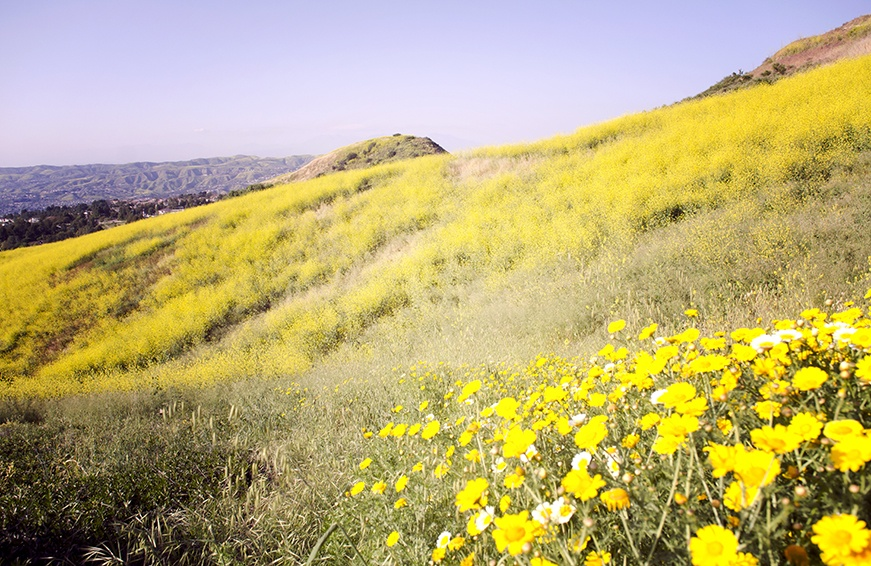 Thumbnail for California's super bloom is too pretty for words—so here are 29 photos of it